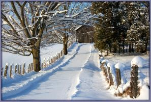 Snowy Lane by Rebacan