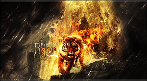 Fire Tiger by maher77