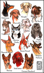 My favorite dog breeds by CanisAlbus