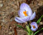 First Flower of Spring by wagn18