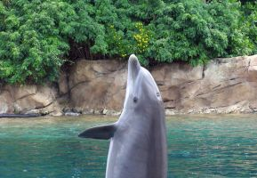 Dolphin at Discovery Cove by shiningstar25