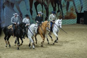 Lusitano Horses canter by EndingStories