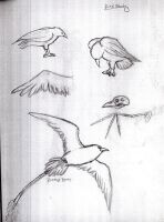 Bird Study by KeeleeHamomin8788