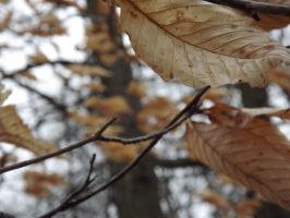 Leaves In The Wind by Gothgirl145