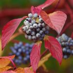 colours of autumn XI by Wilithin