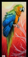 Tusa the Macaw II by Drakarus