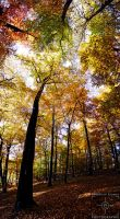 Autumn Trees by Hero-of-Photography