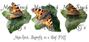 Exclusive Butterfly PNGs by Meta-Stock