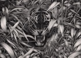 Tiger by Bengtern