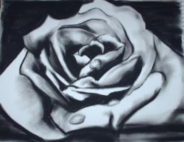 Charcoal Rose by equusly
