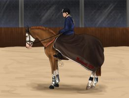 New horse at the stable _ LEASED by Starblas