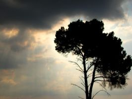 Tree abis by At0micDrag0n