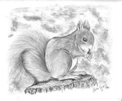 Squirrel by carriephlyons
