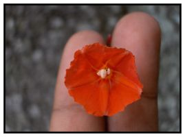 Red in the Hand by Sunira