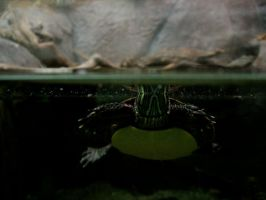 Tortue 1 by Snyki