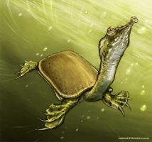 Chinese Softshell by soul71