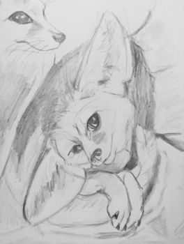 More Fennec Fox Sketches  by thefaeriedragon
