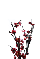Beautiful Flower PNG File- Use Freely by TheArtist100