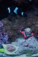 The Diver and the Clownfish by Christazee