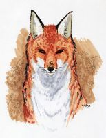 Fox Sketch by Wingless-sselgniW