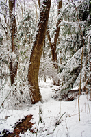 Winter Forest Stock 36 by AreteStock