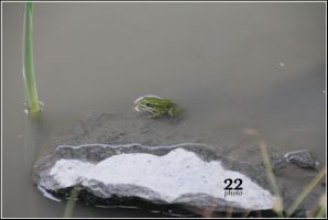 Frog by 22photo