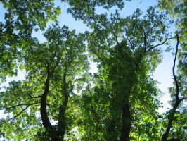 Tree Tops by Holly6669666
