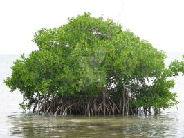 Mangrove Island by belizeanbeef