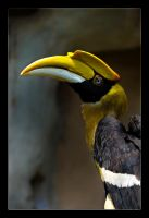Tucan Time by WiDoWm4k3r