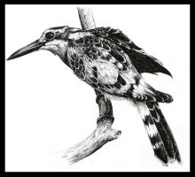 Ink Assignment 3: Kingfisher by avi17