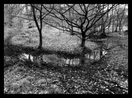 Trees and Puddle by neoweb