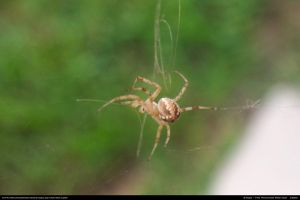 Spider Stock 0004 by phantompanther-stock