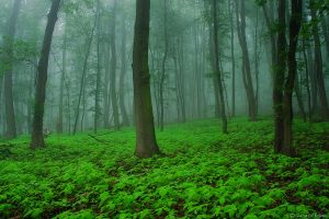 foggy forest in summer by functionizer
