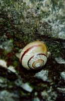 Snail 2 by 0nemanstudio
