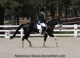 Dressage 009 by Notorious-Stock