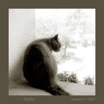 Dytka in The Window by YoPedro