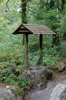 Forest Well 1 by fuguestock