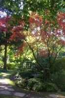 japanese garden in autumn by ingeline-art