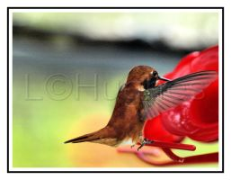 Caught in Flight by lehPhotography