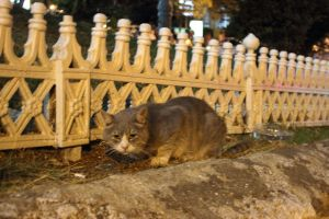 Istanbul 2012 - Animals (03) by Demonescuro