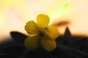 Little Yellow in the Sun by SharPhotography