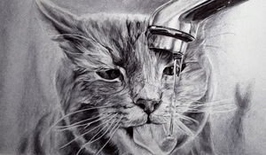 cat and a tap by e-r-k