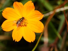 Hoverfly by fractalfiend