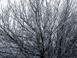 tree of contrast by onlycomeoutatnight