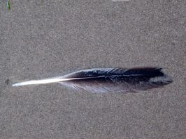Feather 11 -- Sept 2009 by pricecw-stock