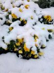 Winter Flowers by Cylessio