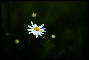 flower 2 by mikeb79