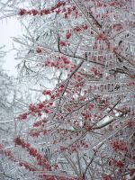 Icy Conditions047 by effing-stock