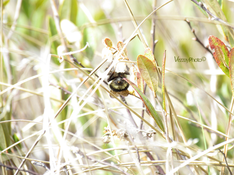 Find the Bee^^ by Vezzay