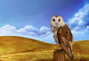 Barn Owl 2 by Oatsprite